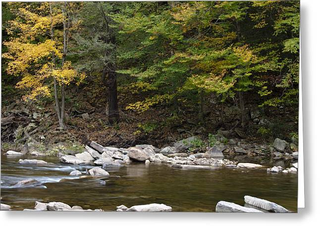 Loyalsock Creek Flowing Gently Greeting Card