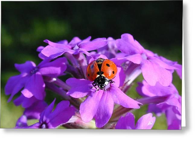 Lucky Ladybug Greeting Card