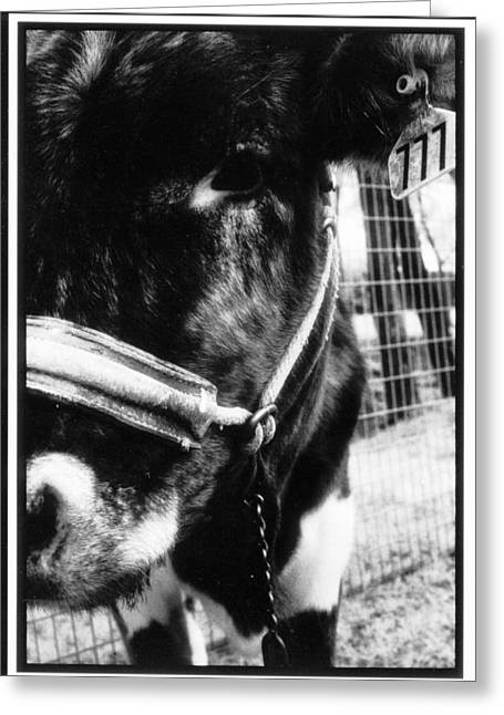 Lucky The Cow Greeting Card by Greg Kopriva