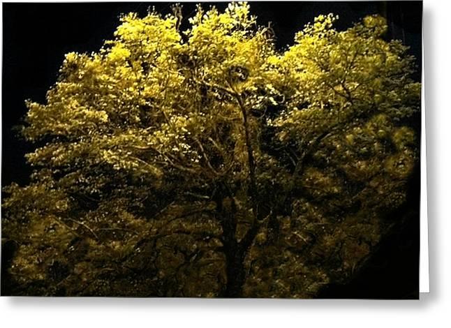 Luminescent Dogwood  Greeting Card by Elizabeth Coats