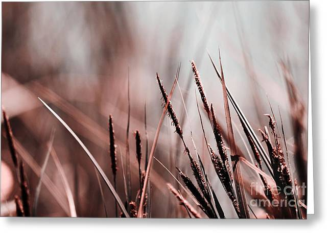 Luminis - S03a - Brown Greeting Card by Variance Collections