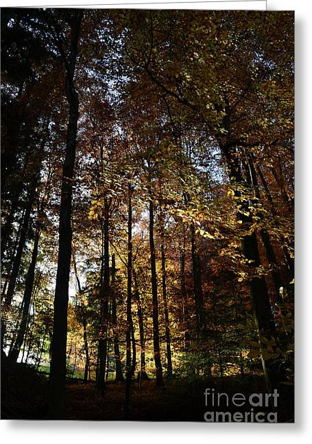 Luminous Forest 2 Greeting Card