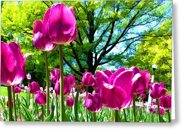 Luminous Purple Tulips In A Flower Garden And Sunny Green Trees Under A Blue Sky Greeting Card by Chantal PhotoPix