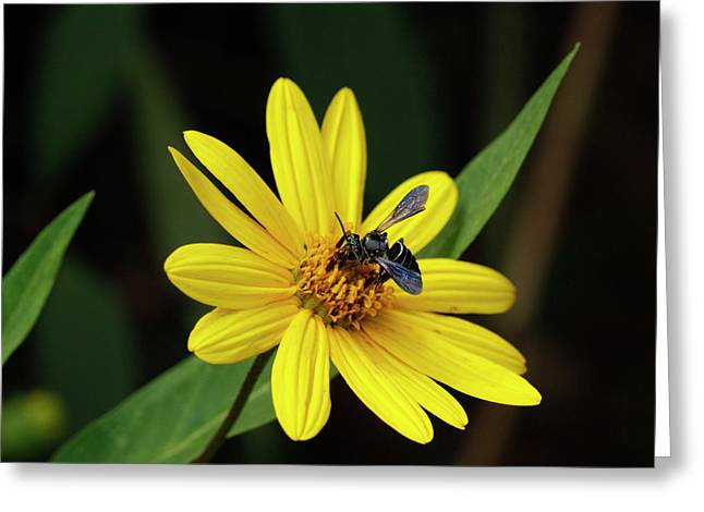 Lunch At Coreopsis Greeting Card