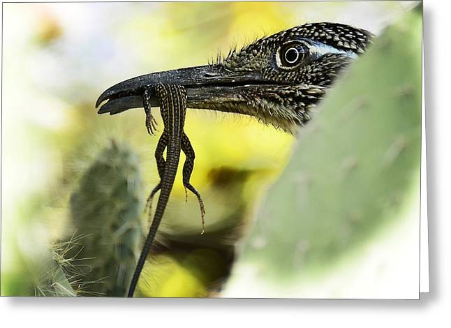 Lunch With A Roadrunner  Greeting Card by Saija  Lehtonen