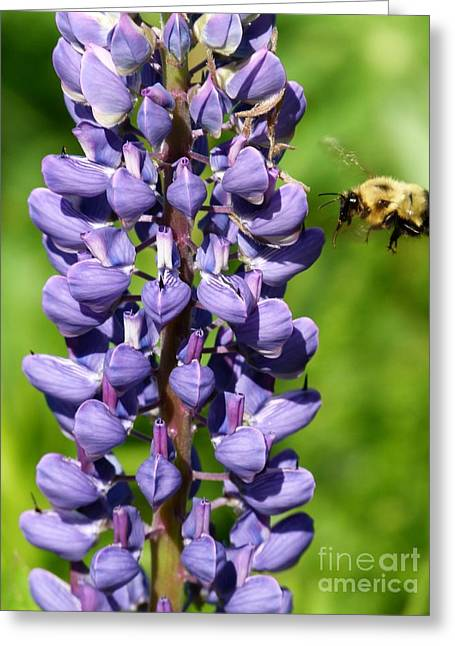 Lupine And Bee Greeting Card by Christine Stack
