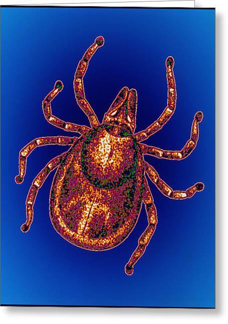 Lyme Disease Tick Greeting Card by Pasieka
