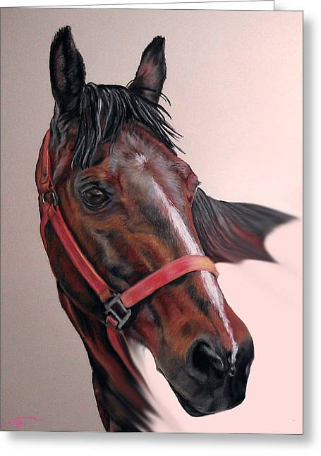 Lynette's Quarter Horse Greeting Card by Ann Marie Chaffin