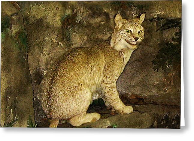 Lynx Greeting Card by Bill Cannon