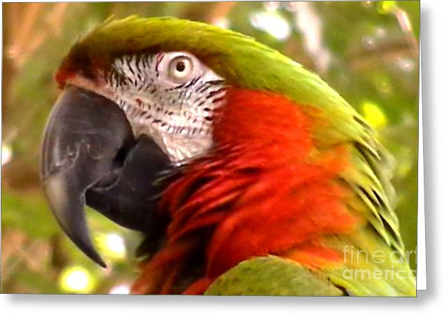 Macaw Alert Greeting Card by John From CNY