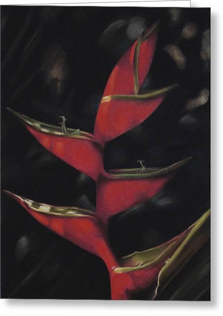 Macaw Flower - Heliconia Bihai Greeting Card by Ben Kotyuk