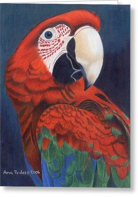 Greeting Card featuring the drawing Macaw Parrot by Ana Tirolese