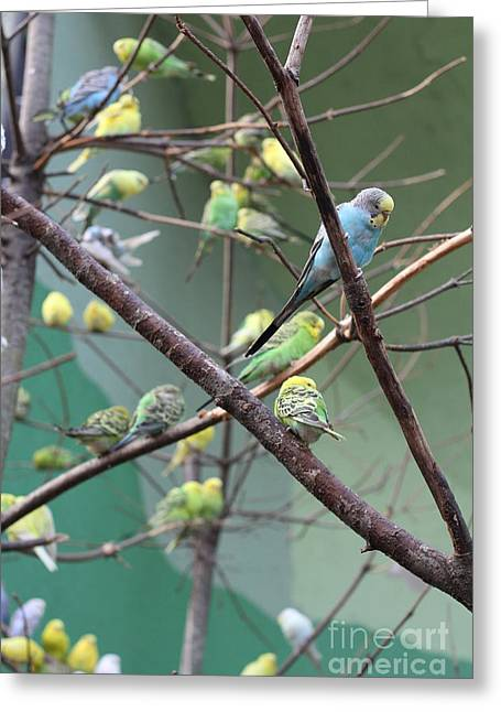 Macaw Greeting Card by Yuro Choi