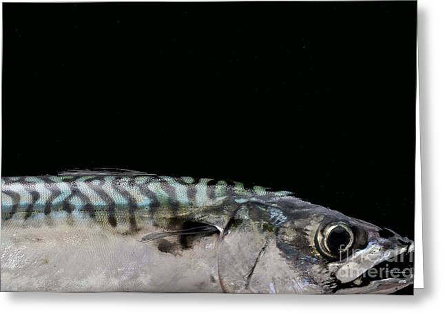 Mackeral Greeting Card by Marion Galt