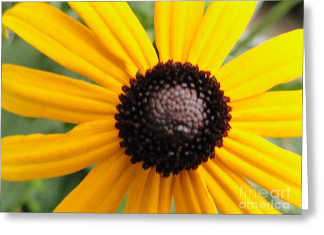 Macro Daisy Greeting Card by Elizabeth Hernandez