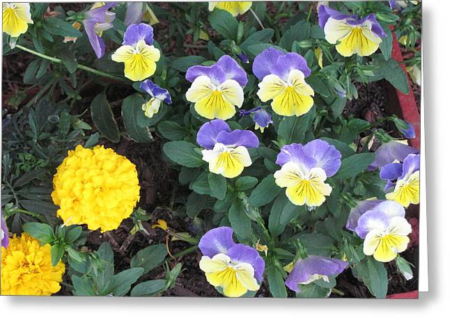 Macro Flower Basket 1 Greeting Card by Amy Bradley