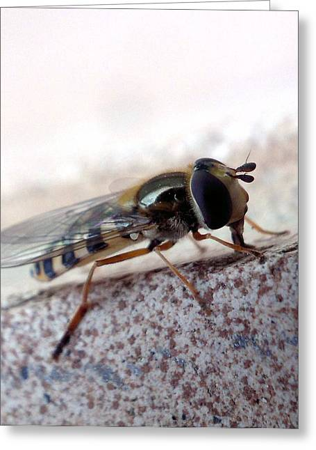 Macro Insect Greeting Card by Ernestas Papinigis