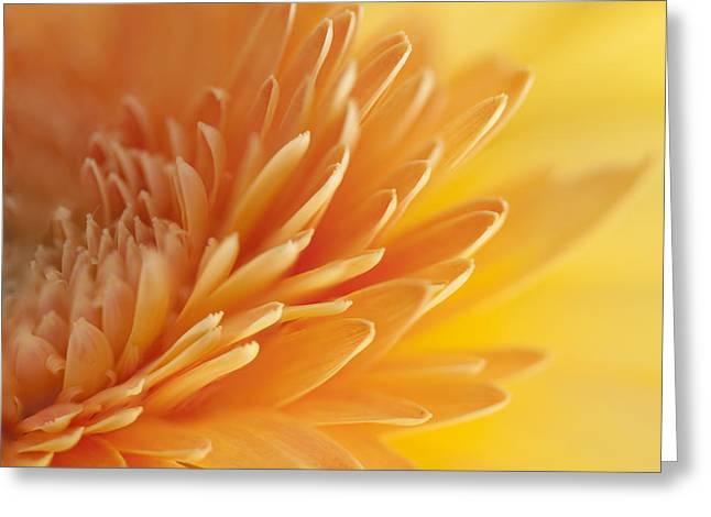 Macro Of Petals Greeting Card by Zoe Ferrie