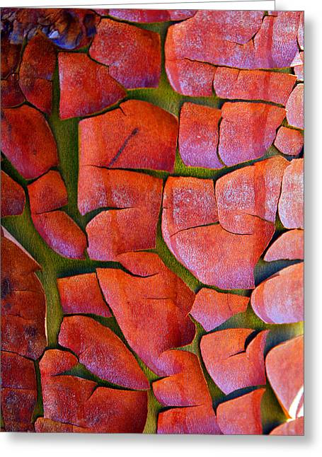 Madrone Greeting Card