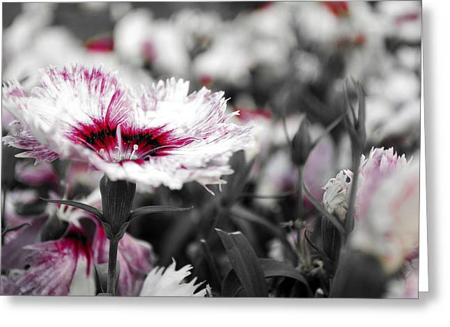 Magenta Flower Greeting Card by Sumit Mehndiratta