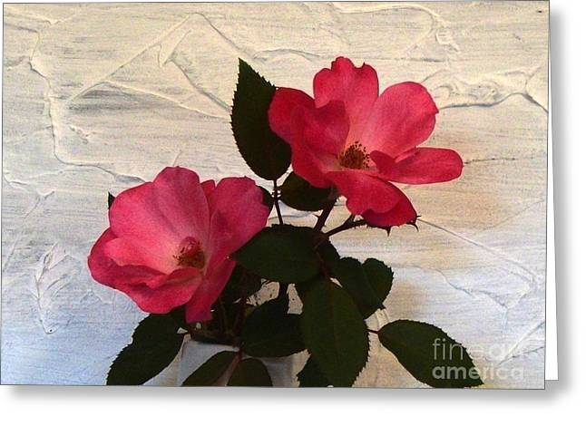 Magenta Roses Greeting Card by Marsha Heiken
