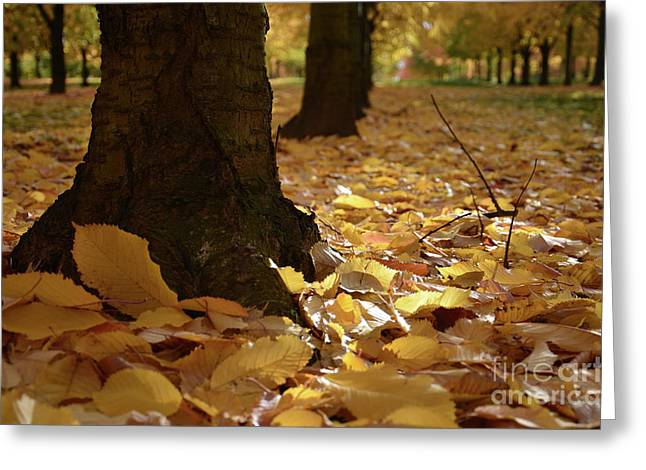 Magic Autumn  Greeting Card by Bruno Santoro