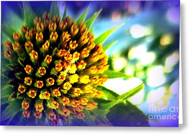 Magic Flower Greeting Card by Maria Scarfone