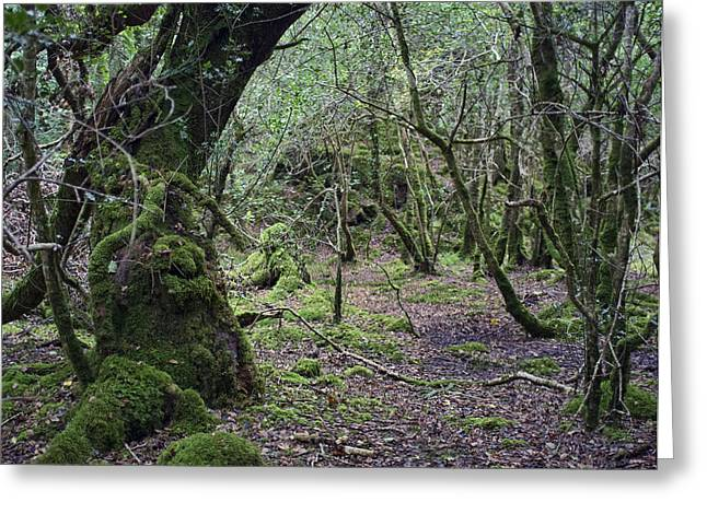 Greeting Card featuring the photograph Magical Forest by Hugh Smith