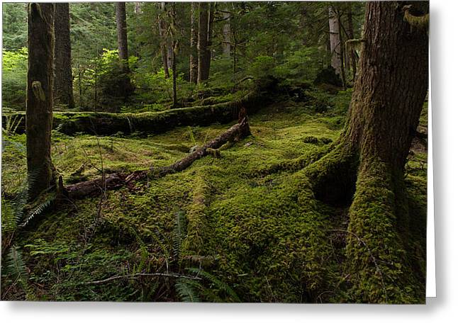 Magical Forest Greeting Card by Mike Reid