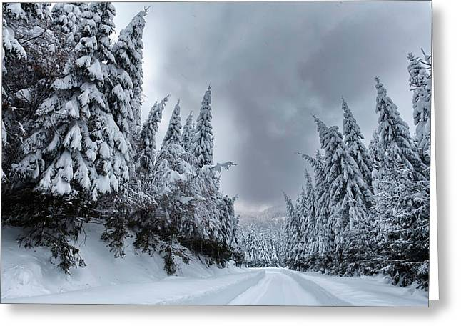 Magnificent Forest Greeting Card by Evgeni Dinev