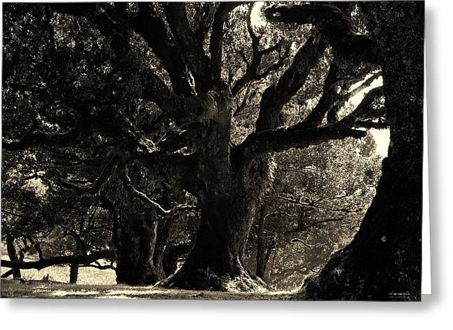 Magnificient Oldesst Tree Greeting Card by Prashant Ambastha