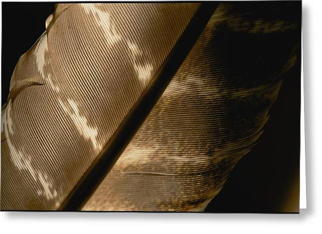 Magnified View Of A Red-tailed Hawk Greeting Card by Brian Gordon Green