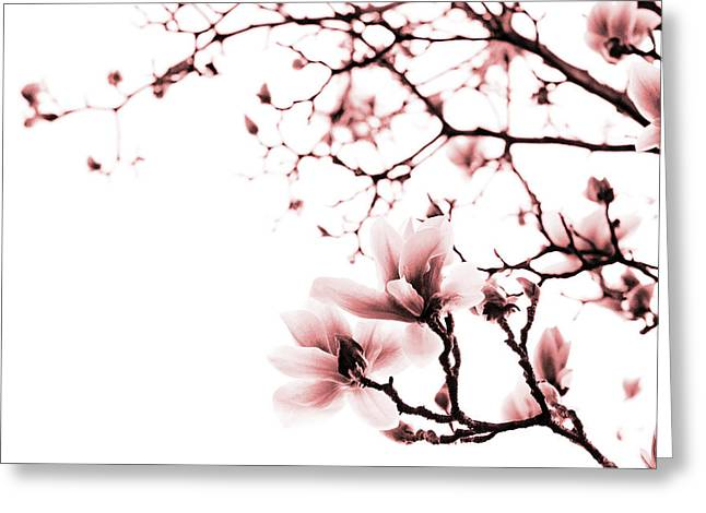 Magnolia - Monochrome Greeting Card by Laura Melis