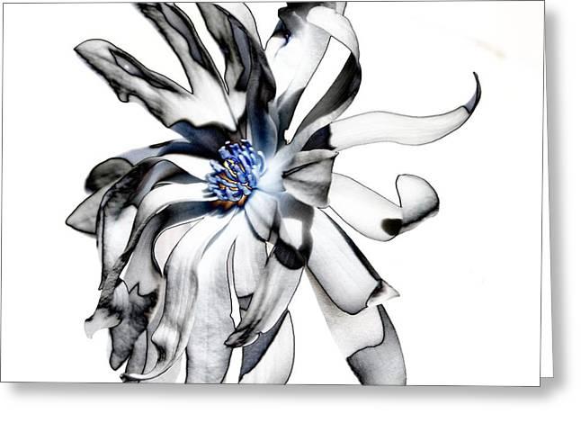 Magnolia Bloom Greeting Card by Mark McReynolds