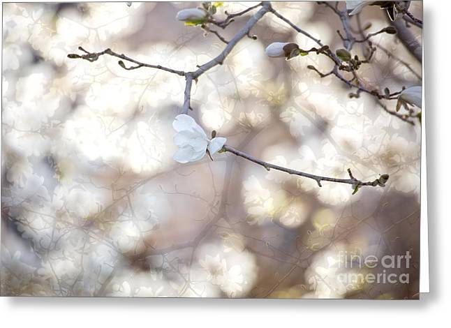 Greeting Card featuring the photograph Magnolia Dream by Susan Cole Kelly