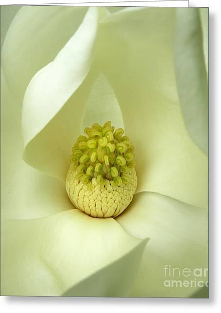 Greeting Card featuring the photograph Magnolia Grandiflora by Deborah Smith