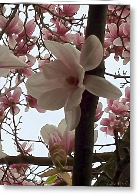 Magnolia Hang On Branch Greeting Card by Debra     Vatalaro