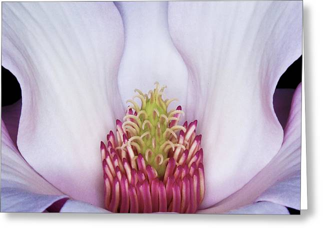 Magnolia Impression Number 2 Greeting Card
