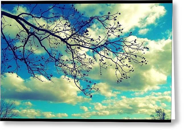 Magnolia Sky Greeting Card by Jessica Thomas