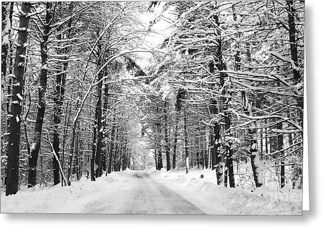 Maine Deep Woods Greeting Card by Christy Bruna