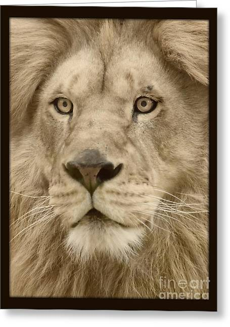 Majestic Lion Greeting Card by Megan Wilson