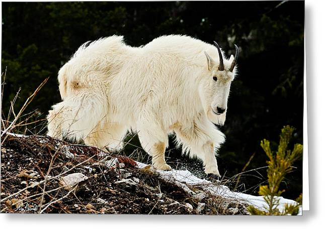 Majestic Mountain Goat Le Greeting Card by Greg Norrell