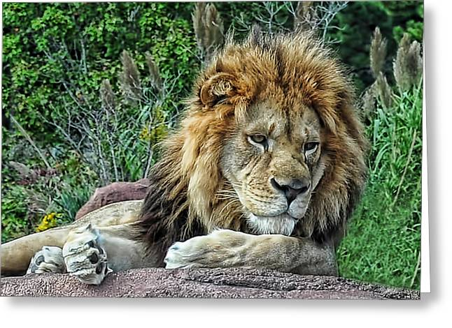 Majestic Greeting Card by Tazz Anderson