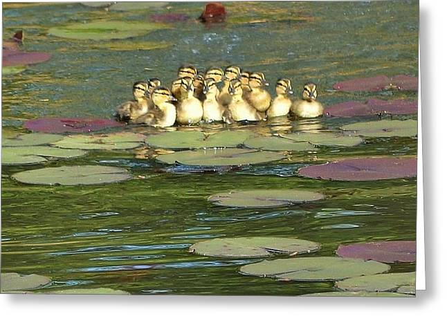 Greeting Card featuring the photograph Make Way For Ducklings by Mary Zeman