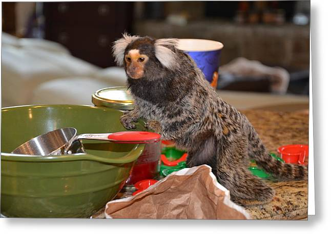 Making Cookies Chewy The Marmoset Greeting Card by Barry R Jones Jr
