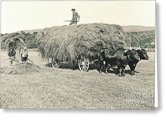 Making Hay While The Sun Shines 1903 Greeting Card by Padre Art