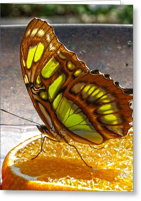 Malachite And Orange Greeting Card