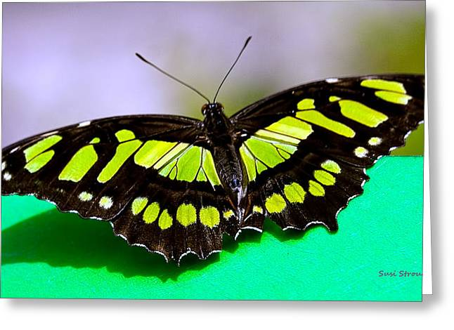 Greeting Card featuring the photograph Malachite by Susi Stroud