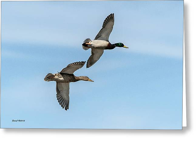 Greeting Card featuring the photograph Mallards In Flight by Stephen  Johnson