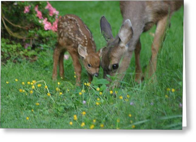 Greeting Card featuring the photograph Mama And Spotted Baby Fawn by Kym Backland